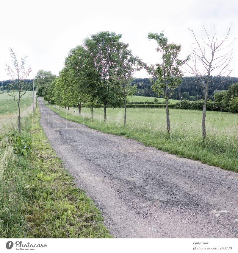 Stiller Pfad Erholung ruhig Ausflug Ferne Freiheit Umwelt Natur Landschaft Himmel Sommer Baum Wiese Feld Straße Wege & Pfade ästhetisch Einsamkeit Horizont