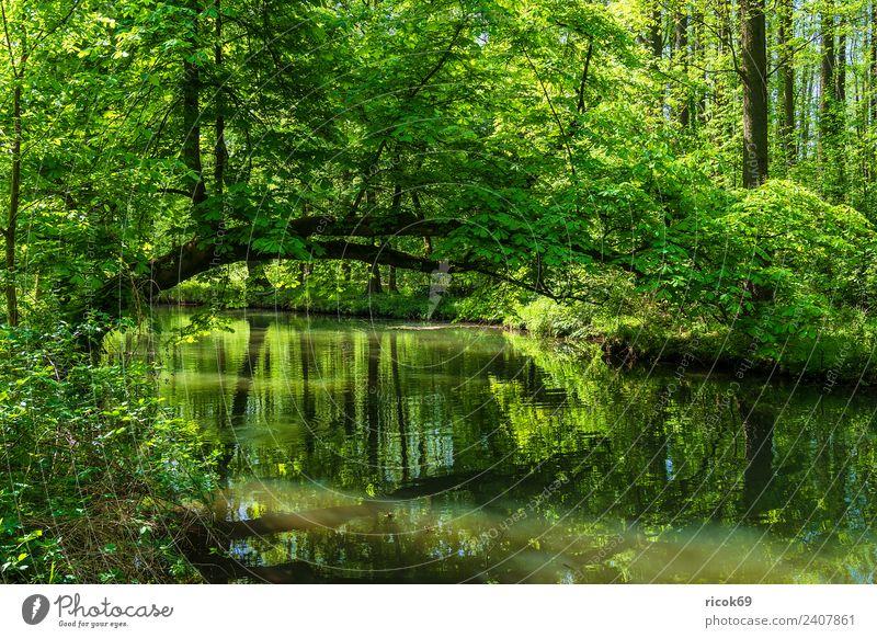 Landschaft im Spreewald bei Lübbenau Erholung Ferien & Urlaub & Reisen Tourismus Natur Wasser Frühling Baum Wald Fluss Sehenswürdigkeit grün Romantik Idylle