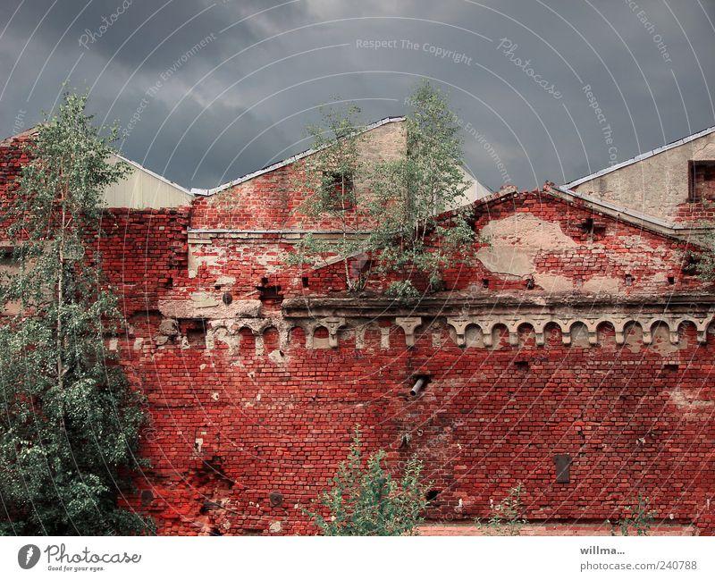 mauerfall alt Baum rot Haus dunkel Wand Gebäude Mauer Architektur Fassade kaputt Dach Vergänglichkeit Wandel & Veränderung verfallen Bauwerk