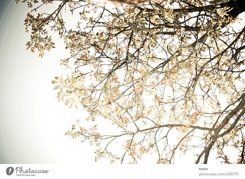 Sonniger Nachmittag Luft Himmel Sonne Frühling Schönes Wetter Baum Blatt Garten Park ästhetisch schön gelb gold Freude Fröhlichkeit Lebensfreude