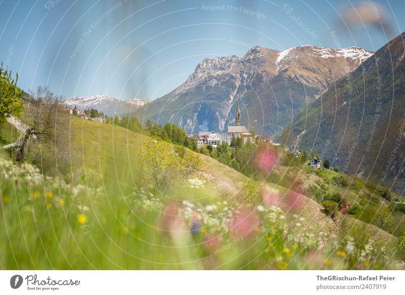 SENT Natur Landschaft blau grün violett rosa Sent Engadin Tal Berge u. Gebirge Kirchturm Kirche Wiese Frühling Blühend Bergwiese Aussicht Panorama (Aussicht)