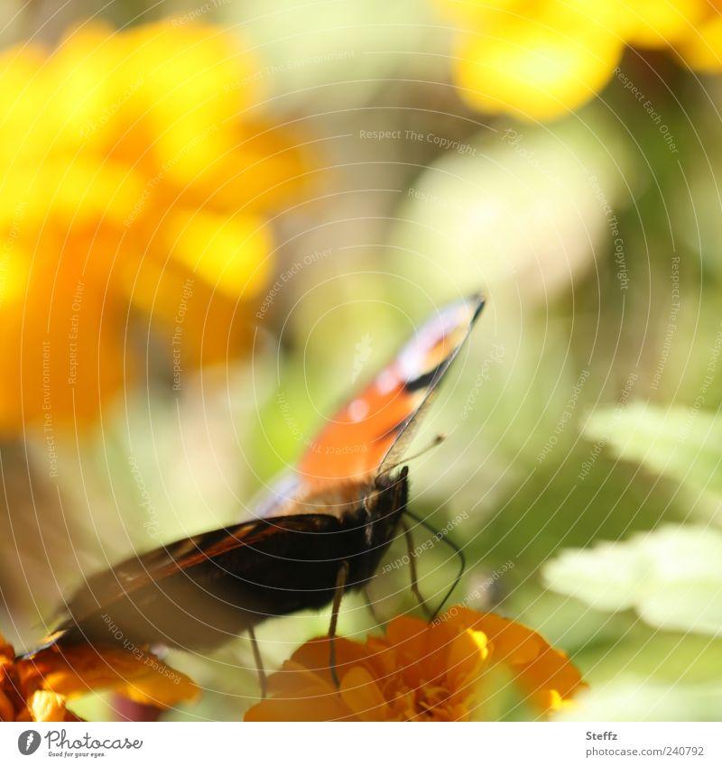 Schmetterling im bunten Sommergarten Falter Tagpfauenauge sommerlich Idylle Pastellfarben Schönes Wetter Pastellton hellgrün Pastelltöne gelb einzigartig