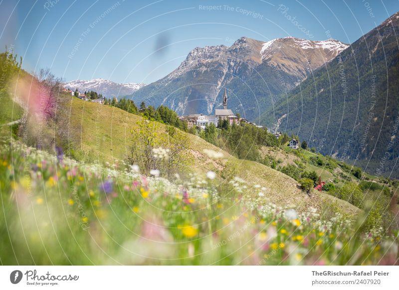 SENT Natur Landschaft Pflanze braun grün violett rosa weiß Berge u. Gebirge Kirchturm Kirche Dorf Engadin Tal Wald Wiese Bergwiese Frühling Hügel Farbfoto