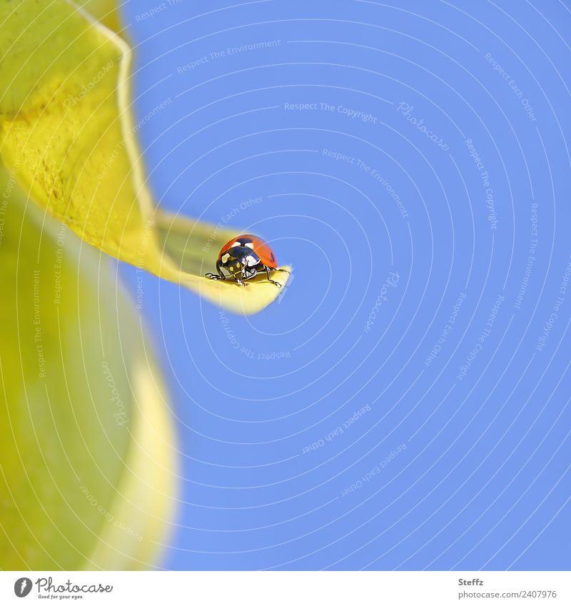Flugpause Himmel Natur Sommer blau Pflanze schön rot Tier Blatt gelb Herbst klein Garten Textfreiraum Schönes Wetter Wolkenloser Himmel