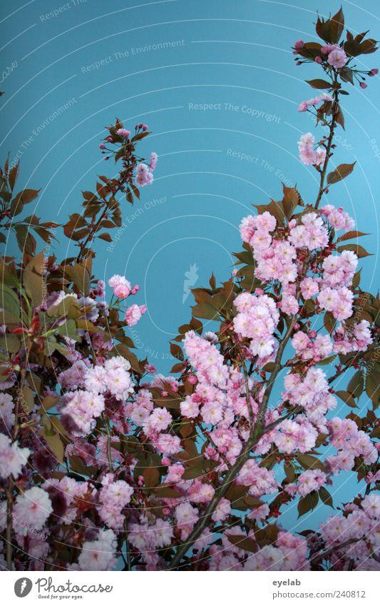 Blütig Himmel Natur blau grün schön Baum Pflanze Blume Blatt Umwelt Frühling Blüte Wetter Frucht rosa natürlich