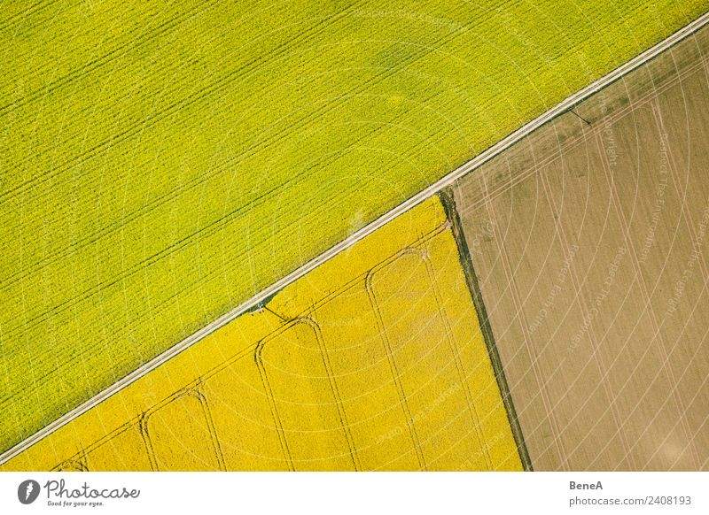 Gelbe Rapsfelder, Acker und Feldwege von oben Natur Sommer Pflanze Landschaft gelb Wege & Pfade Linie Wachstum Energiewirtschaft trist Blühend Fahrradtour
