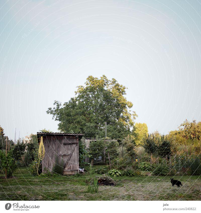garten Natur schön Himmel Baum Blume Pflanze Tier Wiese Gras Garten Katze Feld Sträucher Hütte Haustier Grünpflanze