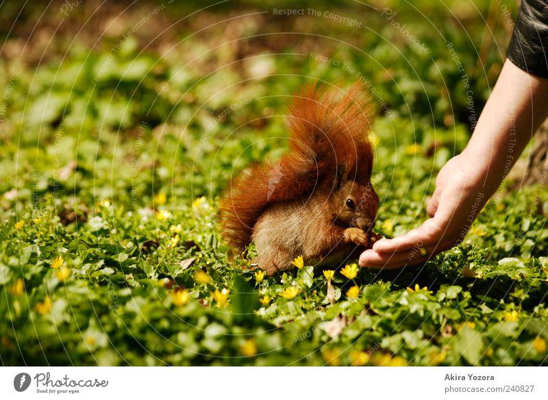Fütterungszeit Natur Hand grün rot Blume Tier Wiese Gras klein Park Freundschaft Zusammensein Arme sitzen Wildtier Hilfsbereitschaft