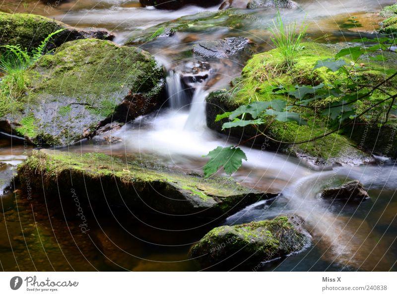 Kleiner Bach Natur Wasser Wald dunkel kalt Stein nass Sträucher Moos Wasserfall Farn Wildbach