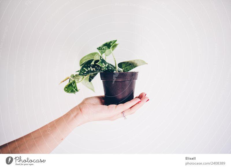 Natur Pflanze grün Hand Umwelt Garten Erde Urelemente Wein Gartenarbeit Halt Zimmerpflanze