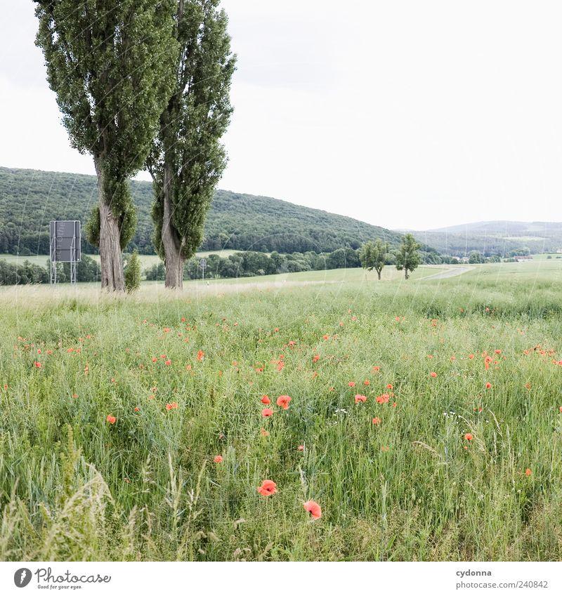 Landstraße harmonisch Wohlgefühl Erholung ruhig Ausflug Ferne Freiheit Umwelt Natur Landschaft Himmel Baum Wiese Feld Wald Hügel Straße Wege & Pfade