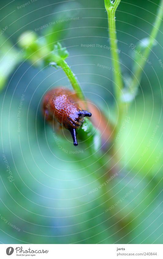 hunger Natur Pflanze Tier Garten Wildtier Schnecke Fühler Grünpflanze