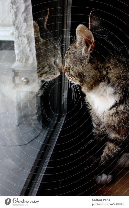 see me Katze Tier Einsamkeit Fenster dunkel sitzen stehen niedlich beobachten einzeln Neugier berühren nah entdecken Haustier Hauskatze