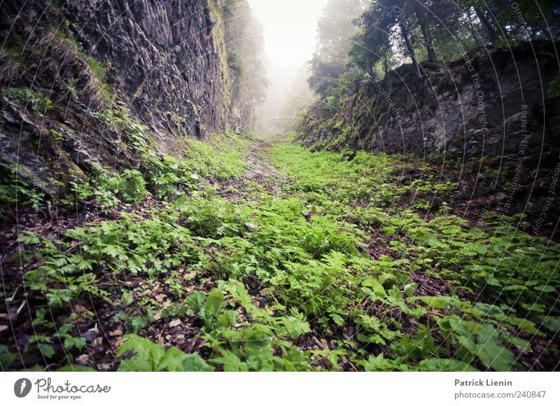 grün und wild Berge u. Gebirge Umwelt Natur Landschaft Pflanze Urelemente Himmel Klima Wetter schlechtes Wetter Nebel Hügel Felsen Schlucht bedrohlich nass