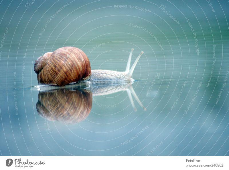 Schneckenexperiment Teil 2 Natur Wasser Tier Umwelt hell Wildtier natürlich nass Urelemente Schnecke Pfütze krabbeln Fühler Reptil Reflexion & Spiegelung Weinbergschnecken