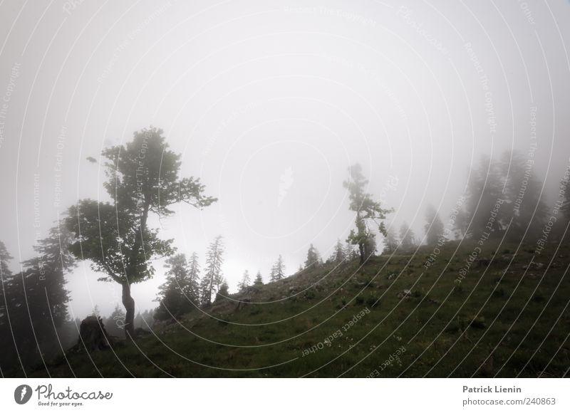 Off the road Umwelt Natur Landschaft Urelemente Wolken Klima Wetter schlechtes Wetter Wind Nebel Baum Wiese Hügel Felsen Berge u. Gebirge dunkel grau Einsamkeit