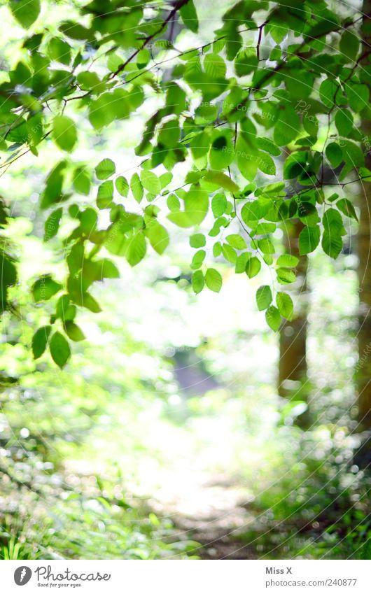 Wanderweg Ferien & Urlaub & Reisen Ausflug Frühling Sommer Baum Blatt Park Wald hell positiv grün Buche Buchenwald Ast Zweige u. Äste Fußweg Spaziergang