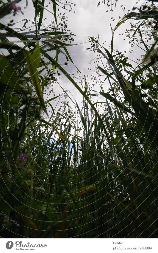 es ist trübes Wetter... Himmel Natur grün Pflanze Sommer Wolken schwarz Umwelt Landschaft dunkel Gras grau Blüte Wetter Feld Klima