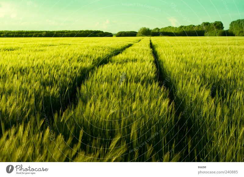Feldjäger Getreide Bioprodukte Umwelt Natur Landschaft Pflanze Klima Schönes Wetter Nutzpflanze Wege & Pfade frisch natürlich grün Spuren Kornfeld Ackerbau