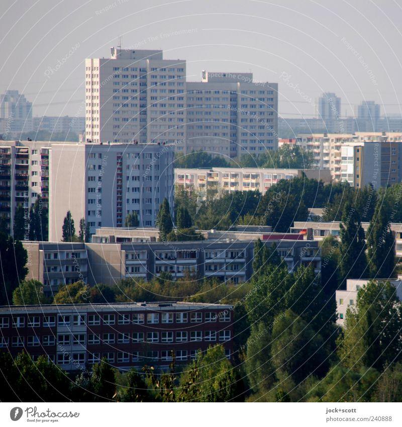einfach praktisch wohnen in Marzahn Stadtteil DDR Sommer schlechtes Wetter Baum Stadtrand Architektur Plattenbau Stadthaus Fassade trist grau Gelassenheit