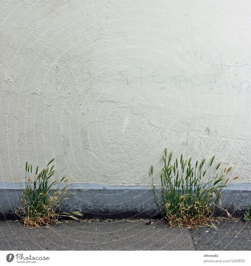 Ernte Pflanze Haus Leben Wand Mauer Gebäude Fassade Hoffnung Wachstum Getreide Bauwerk kahl Nutzpflanze Lebenskraft