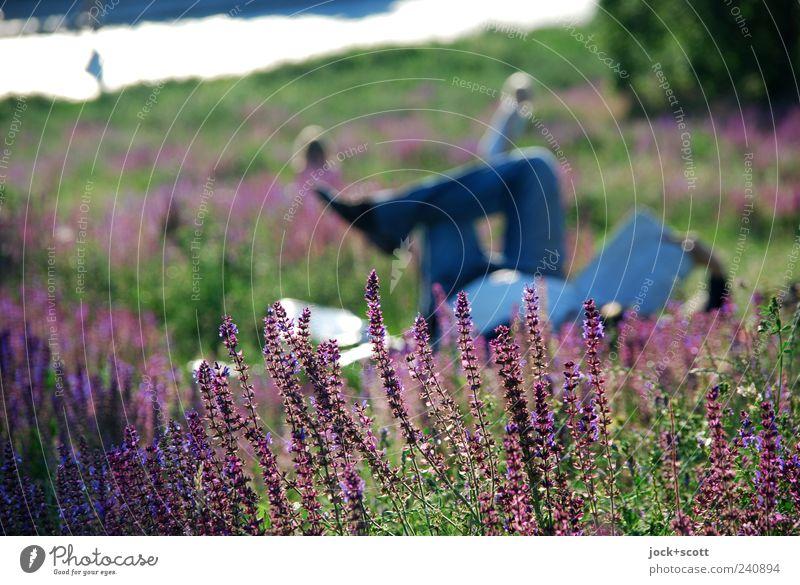 abgetaucht im Grünen Mensch Natur Mann Pflanze Sommer Erholung Erwachsene Wiese Gras Blüte natürlich Beine liegen Park maskulin Freizeit & Hobby