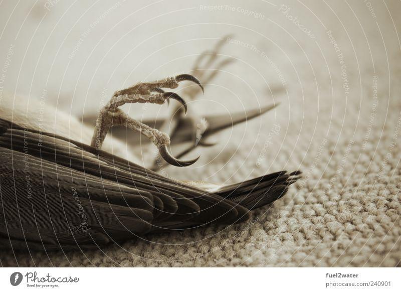 Claws Tier Wildtier Totes Tier Vogel Krallen 1 ästhetisch Tod Farbfoto Gedeckte Farben Außenaufnahme Nahaufnahme Hintergrund neutral Tag Starke Tiefenschärfe