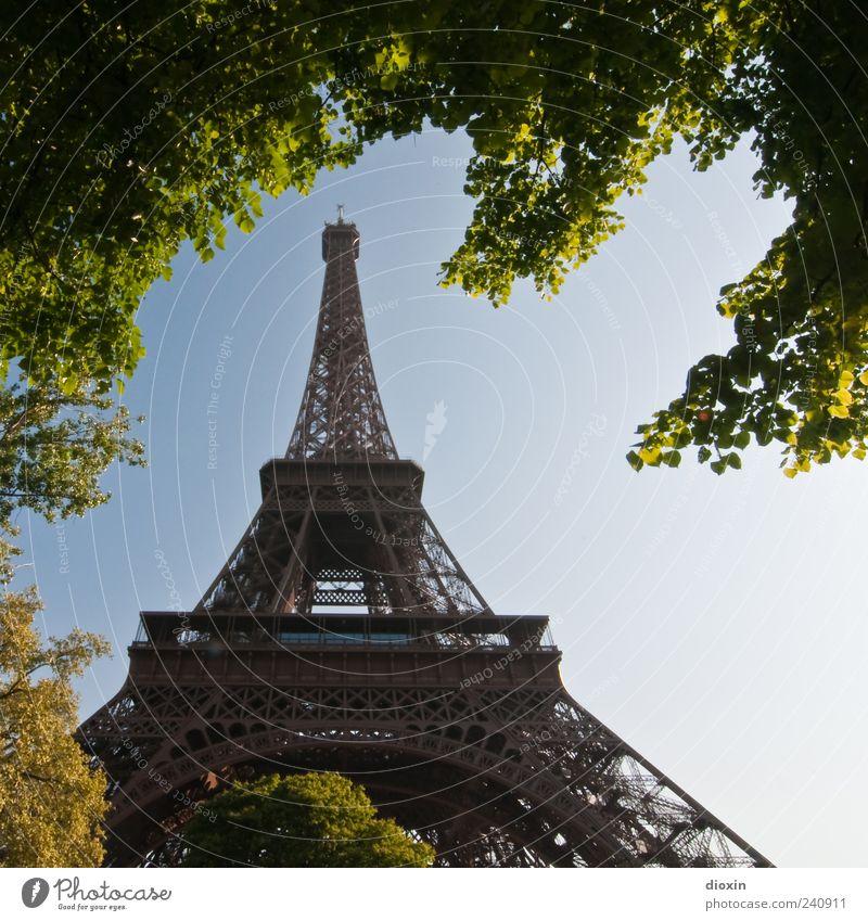 Architeknatur Ferien & Urlaub & Reisen Tourismus Sightseeing Städtereise Pflanze Baum Blatt Paris Frankreich Europa Hauptstadt Turm Bauwerk Architektur