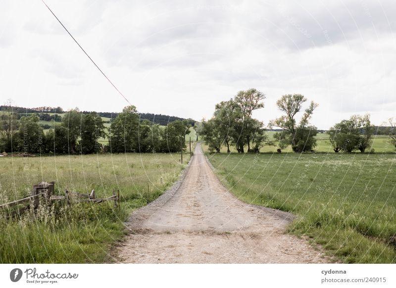 Immer gerade aus Natur Baum Sommer Einsamkeit Wolken ruhig Erholung Ferne Umwelt Landschaft Straße Wiese Leben Bewegung Wege & Pfade Freiheit