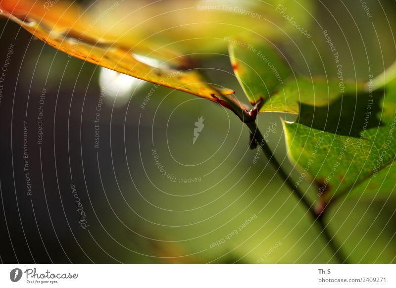 Blatt Natur Sommer Pflanze grün weiß rot ruhig gelb Frühling natürlich elegant ästhetisch frisch authentisch Fröhlichkeit