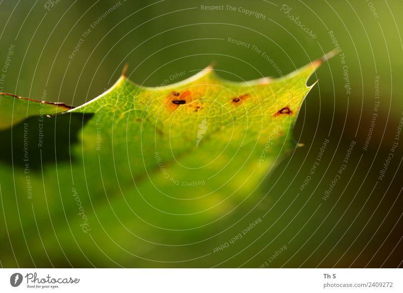Blatt Natur Pflanze Frühling Sommer Blühend ästhetisch authentisch einfach elegant Fröhlichkeit frisch natürlich gelb grün rot Gelassenheit geduldig ruhig
