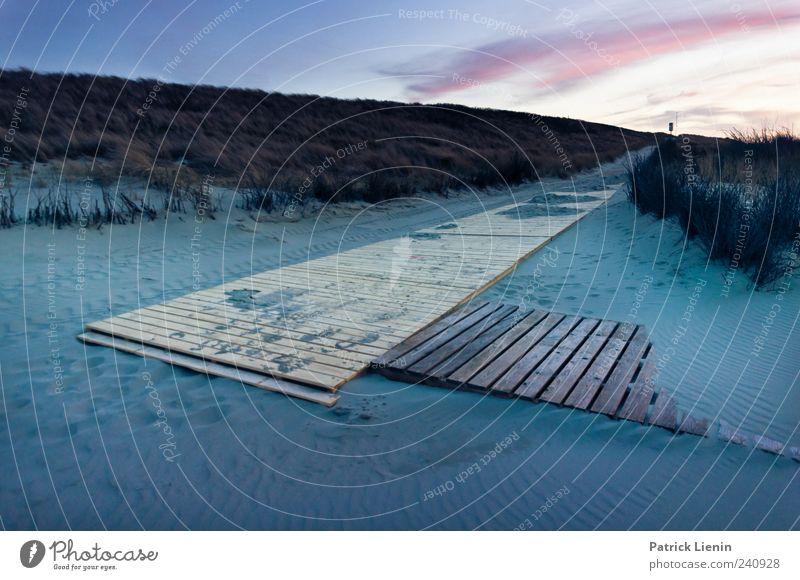 Spiekeroog | Mehr als Meer Strand Umwelt Natur Landschaft Pflanze Sand Klima Wetter Schönes Wetter Wind Küste Nordsee Insel Holz dunkel blau Stimmung ästhetisch