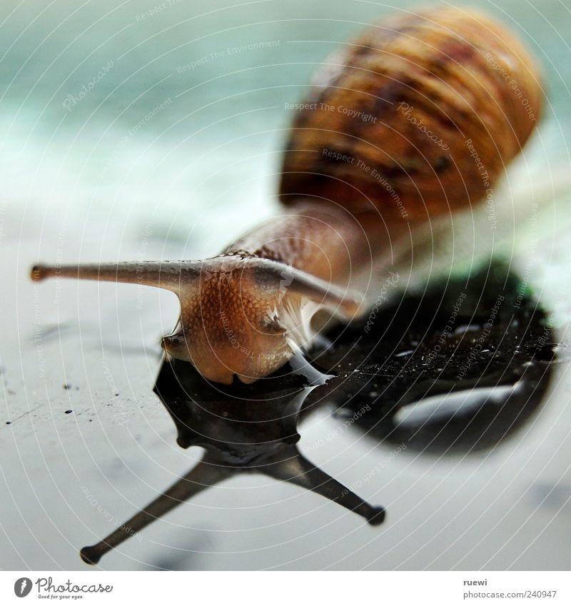 Sn@il_1 blau Wasser grün Tier Auge braun Glas nass Wassertropfen weich Schnecke krabbeln Fühler schleimig Weichtier Schneckenhaus