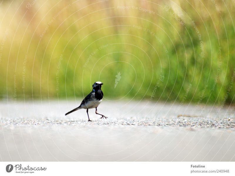 He laß uns tanzen! Natur Pflanze Tier Umwelt klein hell Vogel Wildtier natürlich laufen Urelemente Flügel Asphalt