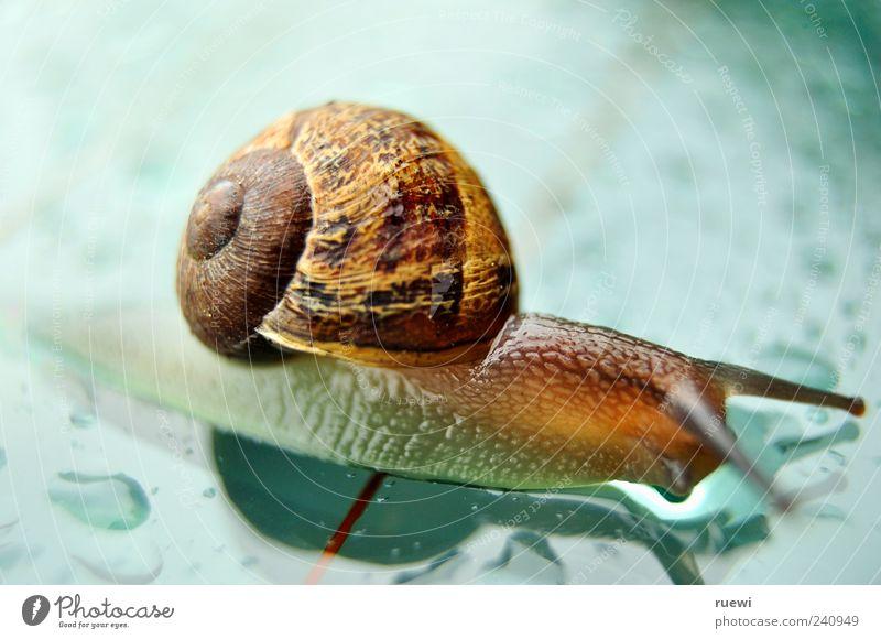 Sn@il_2 Tier Schnecke Weichtier Schneckenhaus 1 Glas nass schleimig blau braun mehrfarbig grün Ziellinie krabbeln Farbfoto Außenaufnahme Nahaufnahme