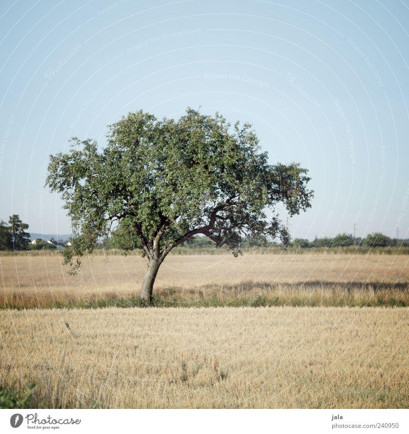 mittsommer Natur Landschaft Himmel Wolkenloser Himmel Sommer Pflanze Baum Gras Sträucher Blatt Grünpflanze Nutzpflanze Wiese Feld schön Farbfoto Außenaufnahme