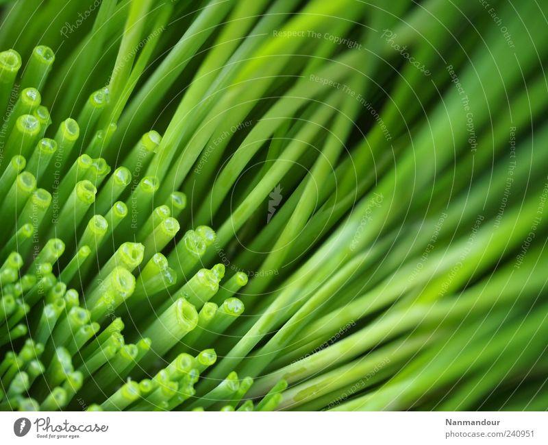 geschnittener und Schnittlauch Lebensmittel Kräuter & Gewürze Gesundheit Pflanze Nutzpflanze Duft ästhetisch grün Farbfoto Außenaufnahme Makroaufnahme Dämmerung