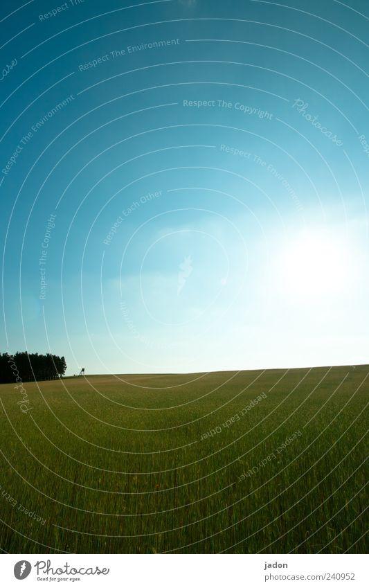 Feldstudie Umwelt Natur Landschaft Pflanze Himmel Wolken Horizont Sonnenlicht Sommer Schönes Wetter blau grün ruhig Hochsitz Außenaufnahme Textfreiraum oben Tag