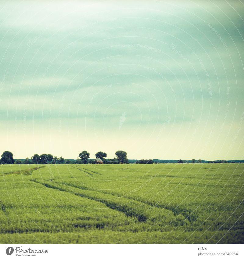 Wege und Linien blau grün schön Pflanze Sommer Umwelt Frühling hell Wetter Feld Wachstum Spuren Nutzpflanze