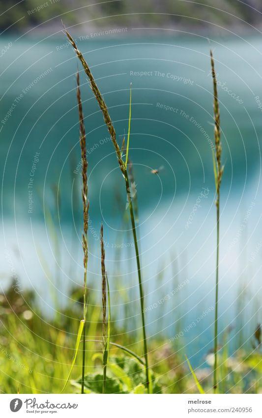 Am Seeufer II ... Natur Pflanze Wasser Himmel Sonnenlicht Sommer Gras Grünpflanze Wildpflanze blau grün Farbfoto Außenaufnahme Nahaufnahme Detailaufnahme