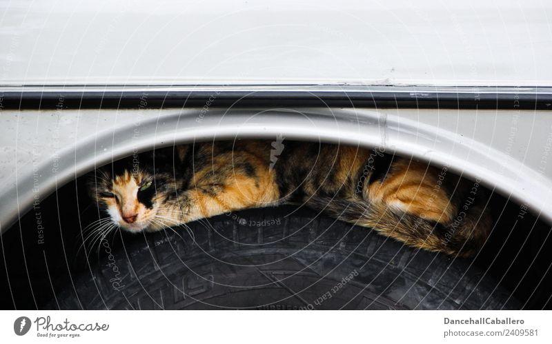 Schlafplatz... Tier Haustier Katze Fell Pfote 1 Erholung liegen schlafen Tierliebe Gelassenheit PKW Autoreifen Karosserie verstecken Versteck Farbfoto