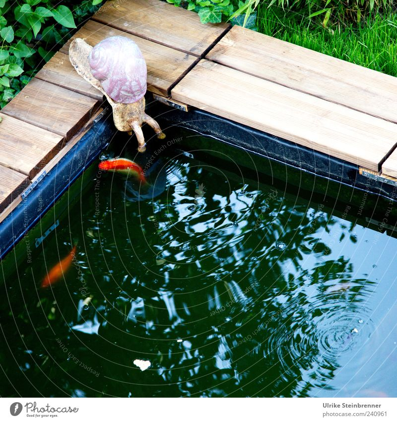 Hi! Blatt Teich Tier Schnecke Fisch 3 Tiergruppe beobachten hocken sitzen Freundschaft Zusammensein Tierliebe Neugier Goldfisch Keramik Skulptur Ton begegnen