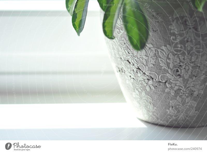Die Fensterbank alt weiß grün schön Blatt grau hell kaputt Dekoration & Verzierung Riss Blumentopf Ornament filigran Fensterbrett verziert Symbole & Metaphern