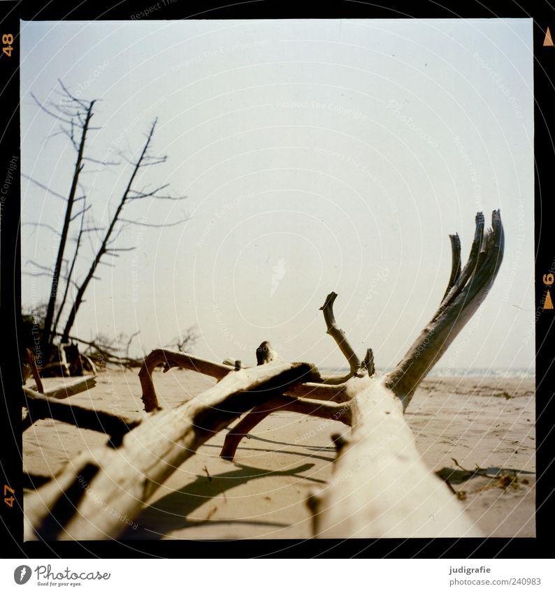 Weststrand Umwelt Natur Landschaft Pflanze Sand Himmel Baum Küste Strand Ostsee Meer Darß dehydrieren natürlich trocken Stimmung Vergänglichkeit