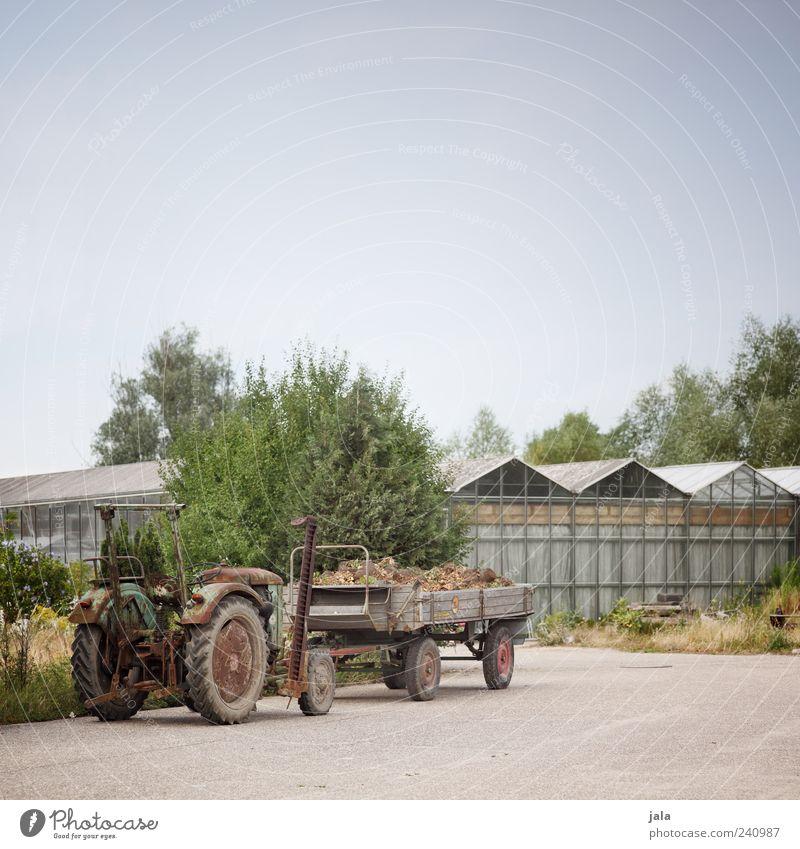 schlepper Himmel Pflanze Bauwerk Gebäude Traktor Anhänger Gärtnerei Gewächshaus Farbfoto Außenaufnahme Menschenleer Textfreiraum oben Tag