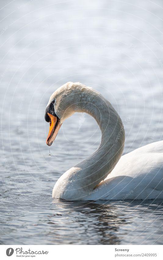 Der mit dem Blubb.... Natur Pflanze Wasser Tier ruhig Frühling Liebe Gefühle See Schwimmen & Baden Vogel orange Wellen Wildtier ästhetisch Wassertropfen