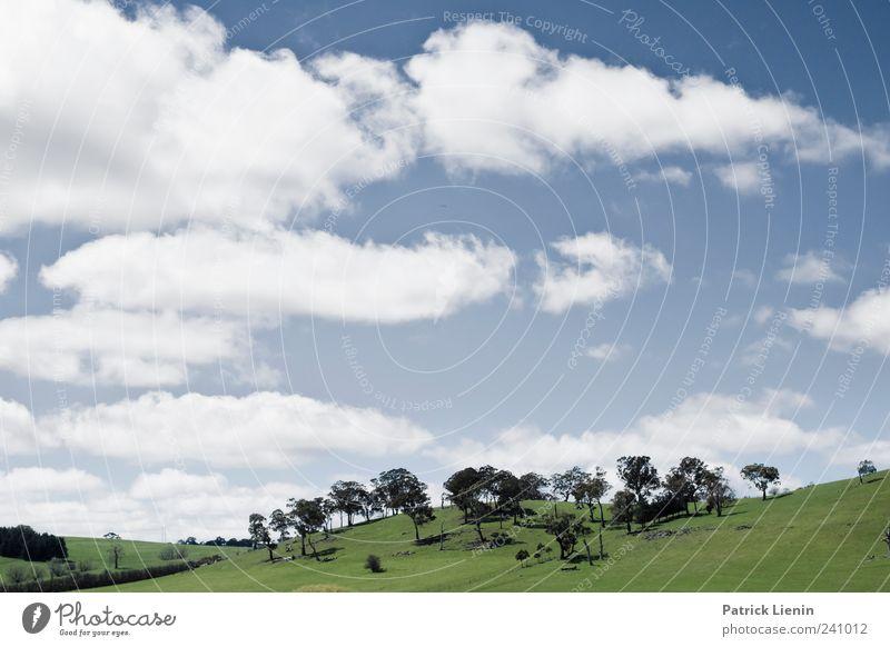 backcountry schön Ferien & Urlaub & Reisen Tourismus Umwelt Natur Landschaft Pflanze Urelemente Luft Himmel Wolken Sommer Wetter Schönes Wetter Baum Wiese Hügel