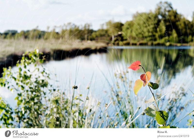Im Himmelmoor Natur Landschaft Pflanze Herbst Gras Sträucher Moor Sumpf See leuchten Farbfoto Außenaufnahme Menschenleer Reflexion & Spiegelung