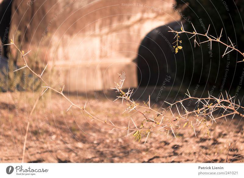 Cranky Rock Natur Ferien & Urlaub & Reisen schön Baum Pflanze Sommer Umwelt Wärme Luft Wetter Klima Ausflug Urelemente Schönes Wetter Australien stachelig