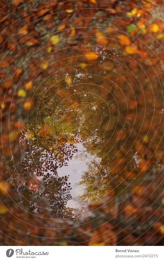 Herbstloch Umwelt Natur Erde schlechtes Wetter Baum Blatt Wald authentisch braun gelb gold orange Pfütze Wasser Sommerloch Herbstlaub verrotten Himmel Loch